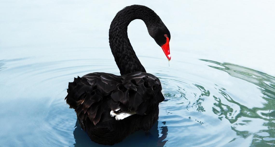 Brünette Mit Prachtarsch Und Ein Schwarzer Schwanz